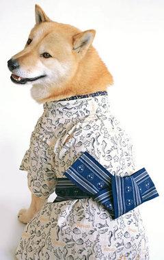 チケットクラブ門前仲町店 日本犬
